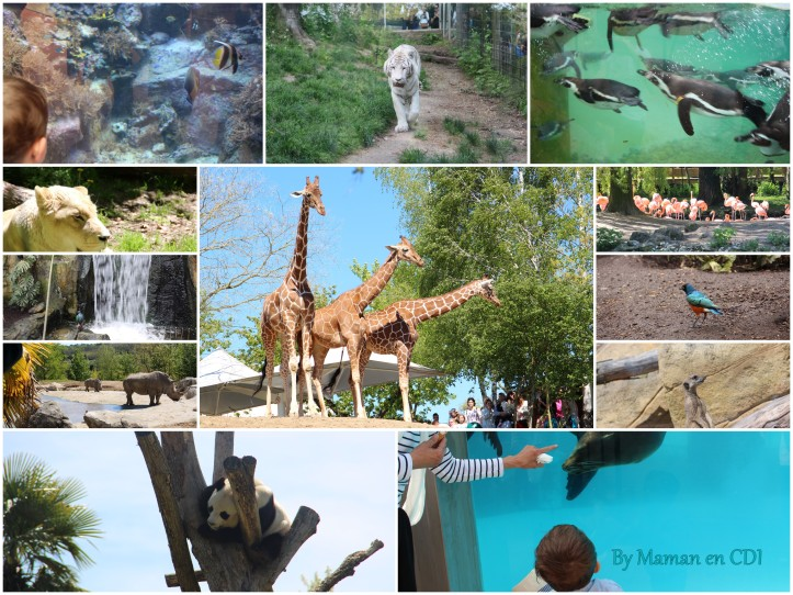 Zoo de Beauval Mai 2016