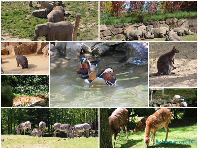 Zoo de Beauval Mai 20162